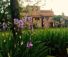Al Monastero San Silvestro gli Iris sono in fiore www.monasterosansilvestro.it