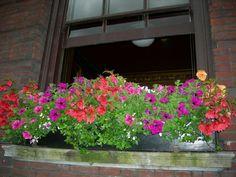 Jardineras en ventana