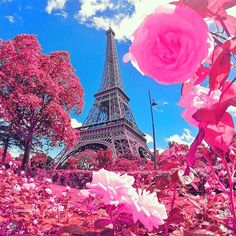 Paris in pink ✨✨ Picture by ✨@Golden_Heart✨ edited by ✨@Izkiz✨ Check out our new blog, link on the bio!!! #Padgram