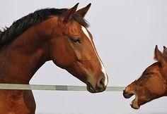 Del-Horses Warmblood Horses, Animals, Animales, Animaux, Animal, Animais