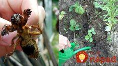 Starý pestovateľ prezradil zvláštny dôvod, prečo mať v záhrade vždy poruke zápalky
