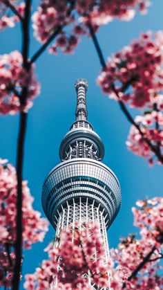 selective focus photography of gray tower photo – Free Plant Image on Unsplash Architecture Images, Beautiful Architecture, Wallpapers For Mobile Phones, Cherry Season, Free High Resolution Photos, Plant Images, Free Plants, New Condo, Focus Photography