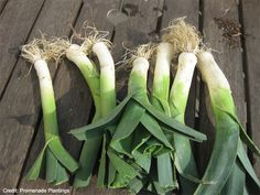 I'm growing leeks this year, are you? http://thefarmersgarden.com/blog/How-to-Grow-Leeks---You-Can-Grow-That.php