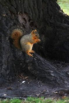 Birds 2, Pet Birds, Beautiful Creatures, Animals Beautiful, Happy Squirrel, Squirrel Pictures, Racoon, Squirrels, Woodland Animals