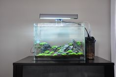 Beautiful Shrimp Tank  http://www.plantedtank.net/forums/showthread.php?t=114156