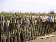 Bonaire by disign2006, via Flickr Travelling, Places, Lugares