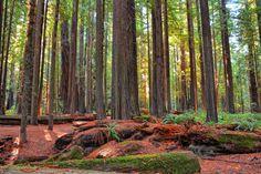 Baharı bekleyenleri mest edecek en güzel orman manzaraları | Girebi