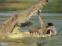 Resultado de imagen para animales monos con sarcasmo