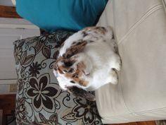 Cute bunny !!