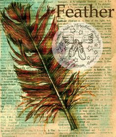 PRINT  Feather on Distressed Dictionary Page by flyingshoes, $35.00
