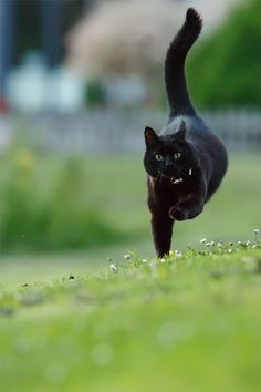 """I have to catch this mouse,"" the black cat said in a panic while prancing through the meadow."