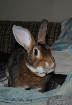 The camera caught bunny at just the right time - July 17, 2014
