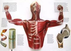 The Human Body - a pop-up book by Jonathan Miller and David Pelham