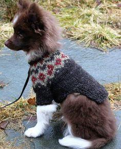 """""""Islandsgenser"""" til hund (Lena Foss - sunn glutenfri mat og strikking)"""