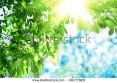Blue Sky With Green Leaves And Sun zdjęć stockowych, obrazów i zdjęć | Shutterstock