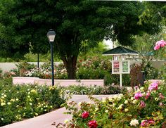 Rose Garden at Mesa Community College, Mesa: See 28 reviews, articles, and 9 photos of Rose Garden at Mesa Community College, ranked No.13 on TripAdvisor among 53 attractions in Mesa.