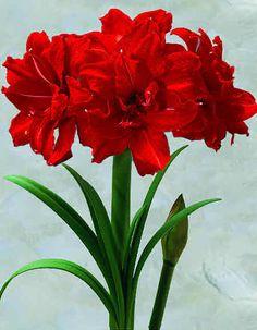 pretty flower gifs - Google Search