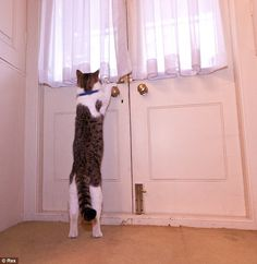 Exploring: Larry from Battersea gets familiar with his new surroundings on his second day living inside No 10