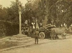 Carballeira de San Lourenzo. Fotos antiguas de Santiago Vintage Photography, Old Pictures, Military Vehicles, Terra, Antique Photos, Cards, Santiago De Compostela, Old Photography, History