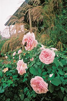 Tips for Choosing Companion Plants for Roses | Types of Trees and Shrubs | HGTV