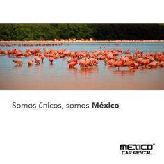 ¿Te gustaría conocer un Paraíso Rosa? Te invitamos conocerlo es Celestún, Yucatán. Renta un auto en: http://mexicocarrental.com.mx/Renta-De-Autos-En-Merida/