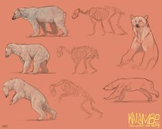 Polar bear study by kalambo.deviantart.com on @deviantART