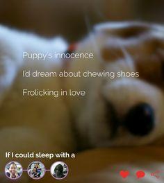 #sleep #dream #puppy #innocence #chew #shoes #pet #love #wish #wistful #poetry #poet #poem #haiku #haikujam