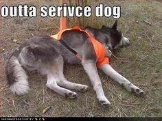 #Husky #rescue + humor: https://www.facebook.com/HuskyMomAtSiberianHuskyRescueOfFlorida