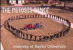 Awesome YouTube video of students dancing out mitosis. So funny and engaging! Prophase-cytokinesis!