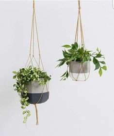 Home Decor 60 Impressive And Simple Indoor Hanging Plants Ideas For Your Home Decor - Women Fashion Best Indoor Hanging Plants, Hanging Planters, Hanging Potted Plants, Indoor Plant Hangers, Fern Plant, Plant Pots, Pot Hanger, Bathroom Plants, Slate Bathroom