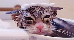 This cat doesn't want to leave its hot bath :D this is beyond adorable!!