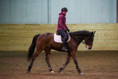 Fôrrytter ønskes   FINN.no Horses, Animals, Dressage, Animales, Animaux, Animais, Horse, Words, Animal