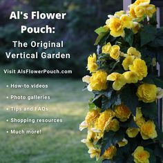 We've launched a new website to inspire growers, garden centres, distributors and home gardeners to get creative with Al's Flower Pouch, the original vertical garden. #alsflowerpouch #afp #websitelaunch #newwebsite #website #site #amahort #amasolutions #verticalgarden #verticalgardening #gardenideas #gardeninspiration #wallbag #flowerbag #plants #greenthumb #myapartmentbalcony #redecormyhome Horticulture, Garden Center, Garden Inspiration, Garden Visits, Garden Solutions, Vertical Garden, Flowers, Green Thumb, Garden