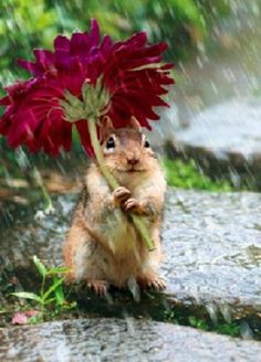 Whimsical Raindrop Cottage, llbwwb: Chipmunk with flower umbrella. by...