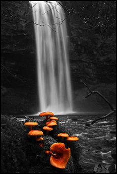 *Henrhyd Falls - Picking out the Shrooms
