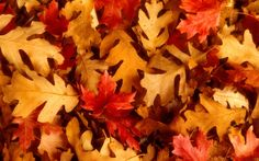 Fall Leaves Wallpapers Widescreen
