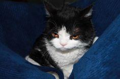 The Daily Grump | January 3, 2013: Pokey has the sweetest face :-)