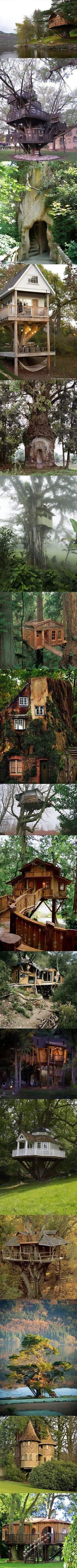 Tree homes, because I shall spend my years as a hermit in a tree house with a extensive library. :D