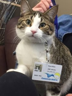 This cat's name is Meow Meow and she'll be assisting you on your pleasant flight today.