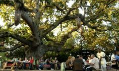 Spend a summers evening in the tree top table at Moyo Stellenbosch I Cape Town Stuff To Do, Things To Do, Tree Tops, Summer Evening, In The Tree, Cape Town, South Africa, Dolores Park, Travel