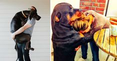 These 17 Dogs Just Can't Stop Hugging Their Humans