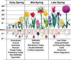 What has to be considered in planning these displays?      Timing: bloom time (early, mid and late).  Color: Bright colors with dark, hot colors with cool, echo colors.  Size: Arrange heights for best advantage at bloom time.