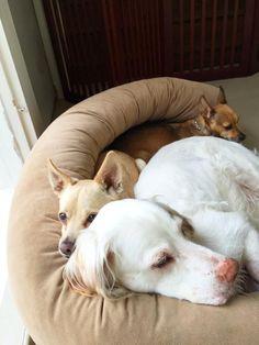 3 loved fur babies. Mac, Toto & Daphne.