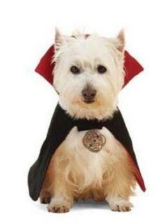 Patrón disfraz de Drácula para tu perro