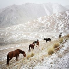 Countryside Horses: horses graze near Son Kul, Kyrgyzstan.