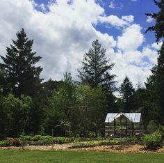 """41 Likes, 3 Comments - Amanda (@amandarecker) on Instagram: """"Garden therapy. 💚🌱#garden2017 #gardening #garden #palramchalet #palramgreenhouse #palram #oregon…"""""""