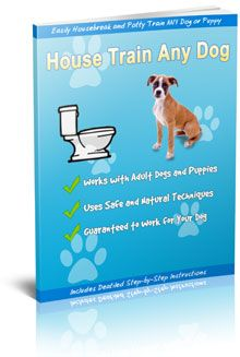 How to Housetrain Any Older Dog