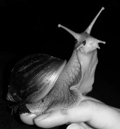 How to Care for Giant African Land Snails: 9 Steps