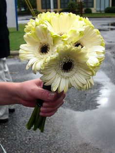 Gerber Daisy Bouquet by WishLaura, via Flickr... i want this for the bridesmaids in cream
