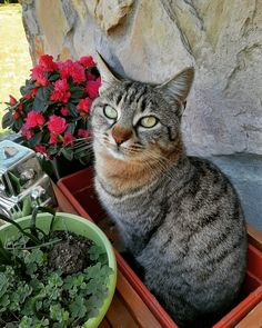 #chiantigreengold #pornanino #gardening #catsofinstagram #cat #farmlife #spring #flowers #chianti #tuscany #italy🇮🇹 #love #animals #family #familytime❤️ #garden #gardener #springtime Tuscany Italy, Farm Life, Spring Flowers, Green And Gold, Cats Of Instagram, Gardening, Animals, Animaux, Lawn And Garden